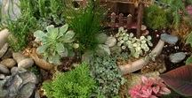 Our Fairy Garden Creations! / Here are some of the unique and fun fairy gardens created at BackHome-onTheFarm! All supplies are available at our Greenhouse.