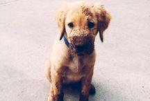 Hundis / Alles um die tollsten Tiere der Welt!