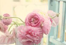pink / alle soorten rose