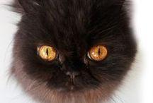chat- / photos de mon chat qui m'accompagne dans tous mes projets