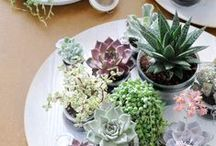 Home | Houseplants / Plants that I will probably kill through utter neglect :( But love buying anyway!