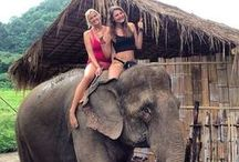 Elephants and Sexy Women 7/Elefanten/Fun/Travel/Reise