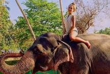 Elephants and Sexy Women 9 /Elefanten 9 / Fun & Travel