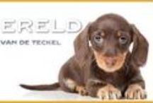 Teckelwereld / www.teckelwereld.nl is een online voor teckelliefhebbers in alle maten en soorten