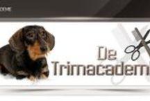 De Trimacademie / Trimopleidingen: opleiding Hondentrimmen, Kattentrimmen en Zelfstudie