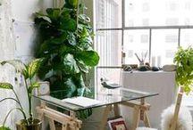 DECOR // home / Plants, lighting, wood, textiles, cozy, eclectic, rustic