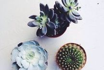 GARDEN // A Succulent Life / I've hopped on the bandwagon and haven't looked back at the sad, succulent-less life since.  Too bad pinterest discourages sharing your own content...my babies are hella cute. <3