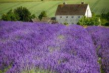 Beauty of rural scenery
