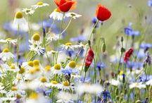 Colors of rural nature
