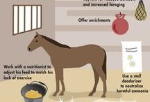 The Sale Horse Care Tips / Practical advice for taking good care of your ponies.