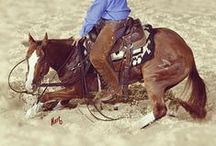 The Sale Horse Performance Goals / Bucket list and things to aspire to in and out of the arena.
