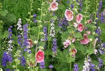 Country cottage garden / by Bernard Toulgoat