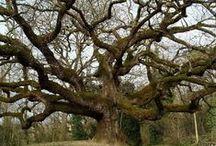Nature-arbres