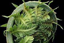 Nature-Flore