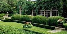 plants - garden