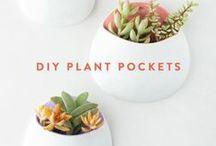 Növények / Plants