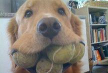 Funny dogs, cani divertenti, perros divertidos