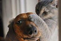 Dogs & friends / Cani e altri animali