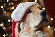 Xmas / Foto natalizie di cani