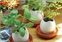 Zahrada a balkon / Kytky, venkovní prostory, jezírka, bylinky atd.