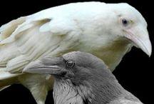 Animals - Albino