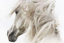 Animals - HORSE