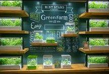 Green Farm - zioła / Ziółka i MY... nie tylko w Green Farmie. Dla zdrowia i dla smaku.