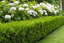 Tuin Hagen / Verschillende soorten Groenblijvende en bladverliezende Haagplanten