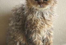 Animals - CATS / Furry