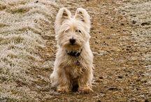 Animals - DOGS / Love love love