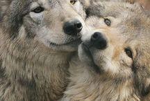 Animals - WOLF / Beautiful