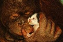 Interspecies Love / Compassion, friendship and love between species / by Gayle J. Greenlea