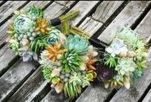 Succulent Weddings  / For the Eco-bride succulents, cacti, and many more earth friendly ideas. www.CaboBeachWeddings.com