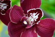 Orchids / by Terri Deneen