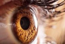 Fun Visual Facts / Interesting and unusual facts related to your eyes or vision.
