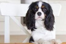Hundeleben / Wir lieben unseren Bürohund Bluna. Und Zeitschriften über Hunde und Katzen und Pferde und Fische und und und ...
