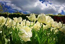 Keukenhof gardens :)