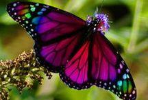 VLINDERS-BUTTERFLY / Vlinders om zelf te maken