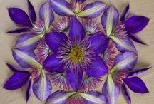 MANDALA'S FLORA / Mandala's die gemaakt zijn met bloemen, bladeren en zaden.
