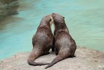 Otter-ly Adorable / Because they're just so cute we couldn't help ourselves. / by OtterBox
