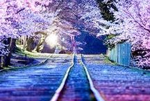 Beautiful Flowers & Scenery