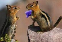 ANIMALS - Wild Wonderful Wildlife / The beauty of animals in the wild