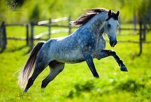 My little pony / by Debi Lynch