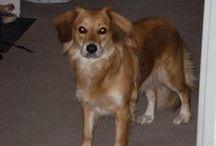 Lajka / Pes je nejlepší přítel člověka