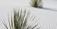 Desert Magic / 100 ways to fell in love with the desert