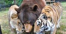Global Animal Sanctuaries