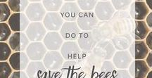 Honey Bee Conservation for Kids