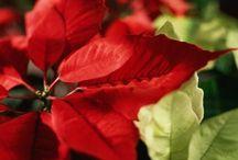 Christmas / by Jeanette Duke