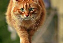 Kitty, kitty / by Liz Miller - Artful Endeavors