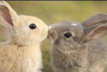 Too Cute! / by Carys Wheeler